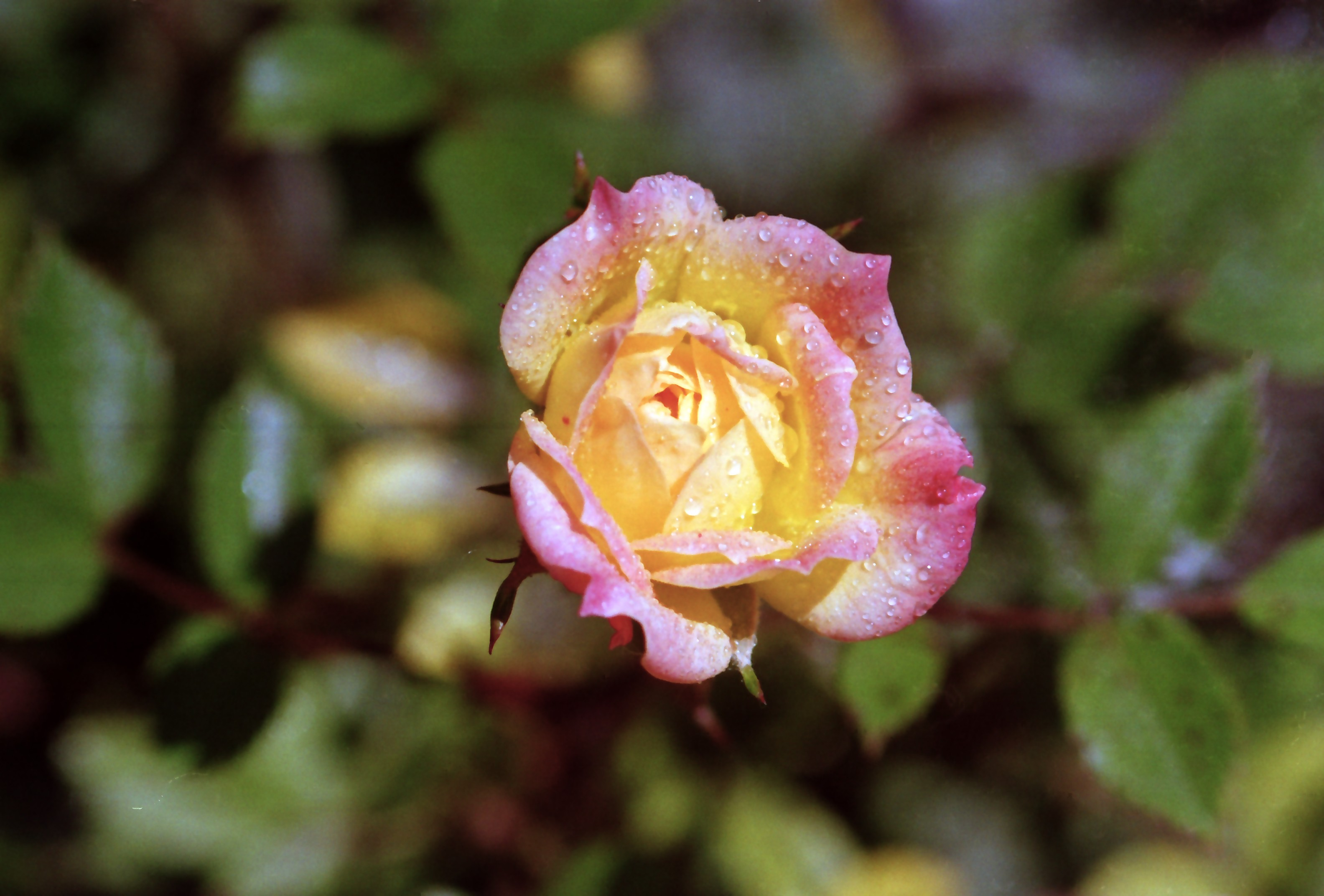 Le on de jardinage isabeauder larurale Jardinage en janvier